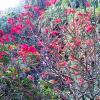 Beautiful flower inside Lal Bagh Bangalore