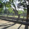 Maragatha Poonga view at Mahabalipuram