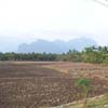 Rice Plant at Theraikalputhoor in Nagercoil