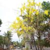 Kanyakumari District Mathur road and trees view