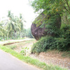 Big rock between the trees at Mathur near Nagercoil