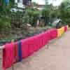 A woman dyeing the same colour on the thread at Srivilliputhur in Virudhunagar district