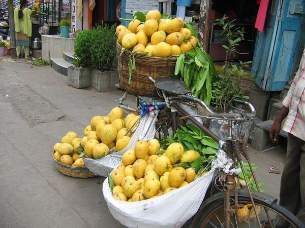 Mango is the national fruit of India and it produces 13 million tons of mangoes a year
