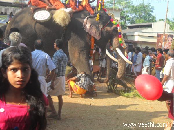 Elephant Eating Coconut An-elephant-eating-coconut