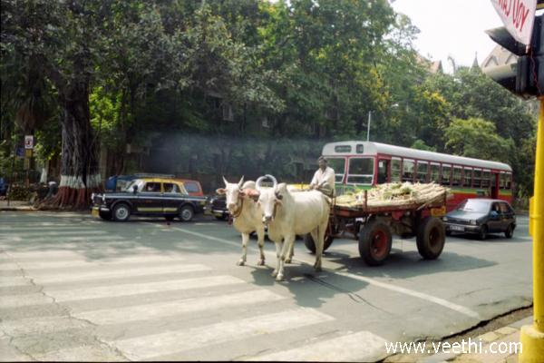 traffic-is-must-for-bullock-cart-also