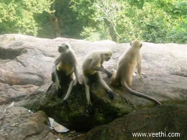 Bhagabatipur Photos
