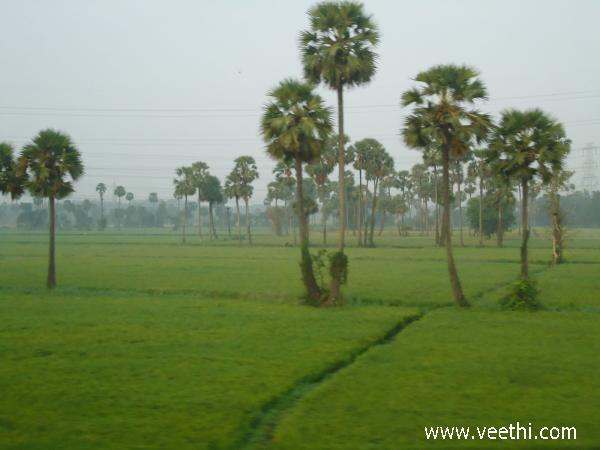 green-field-with-palm-tree-natural-view