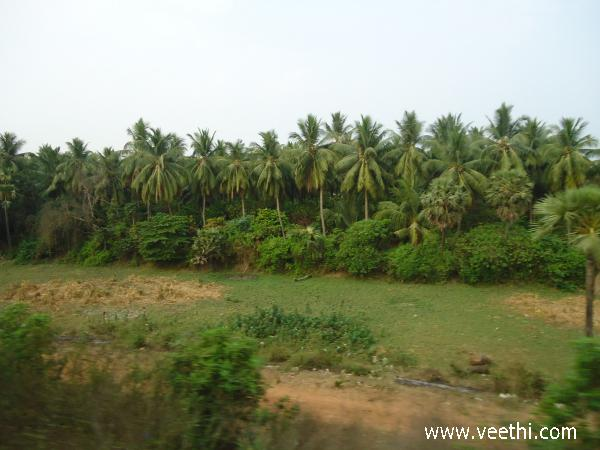 natural-view-of-coconut-forest-chennai