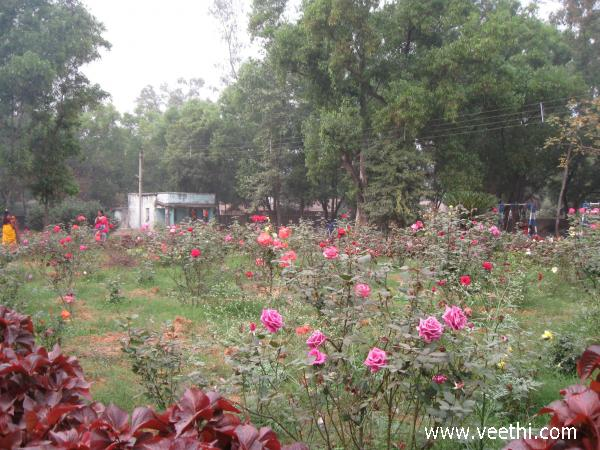 nokrek-national-park-rose-garden-in-cherrapunjee--meghalaya