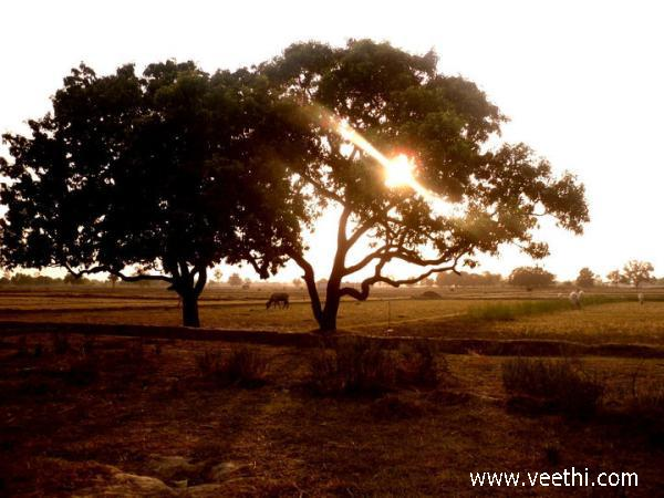 evening-view-at-darbat-pur-in-auraiya
