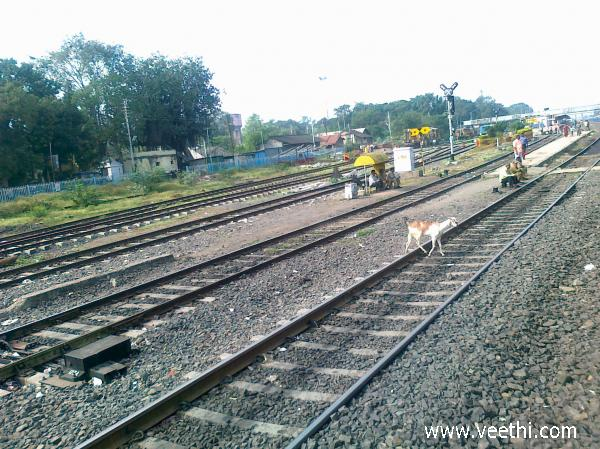goat-crossing-railway-track-near-daund-railway-station