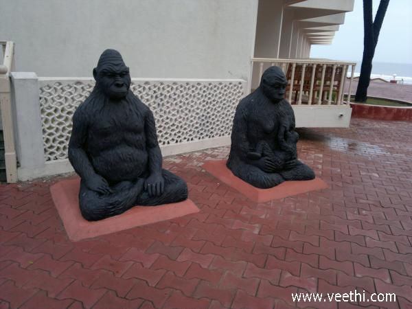 monkeys-at-sugati-beach-resort-diu
