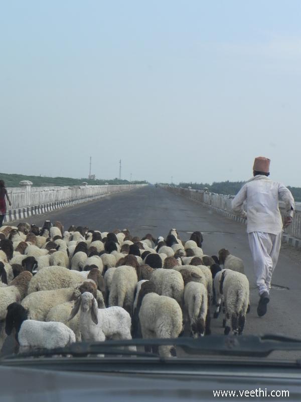 Junagadh Photos