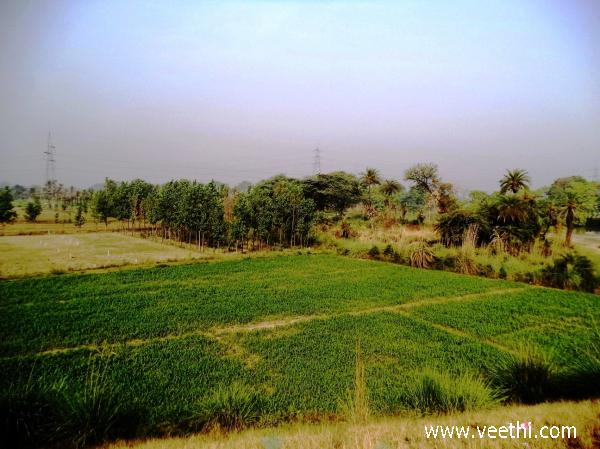 Khatauli Photos