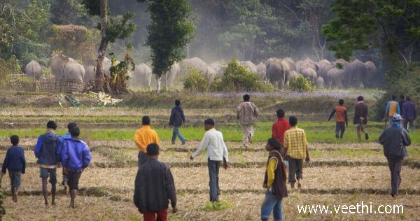 villagejungle-elephant-coming-in-village