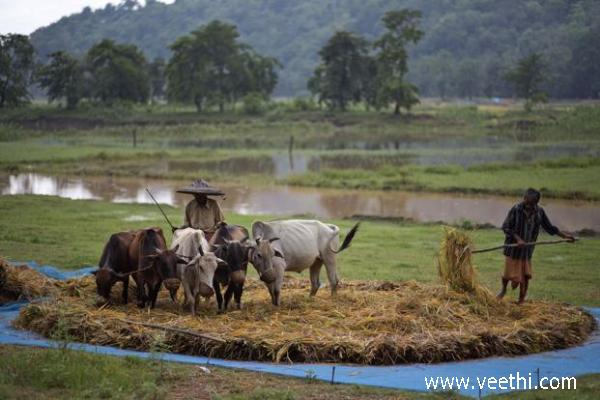 village-farmers-working-in-the-paddy-field