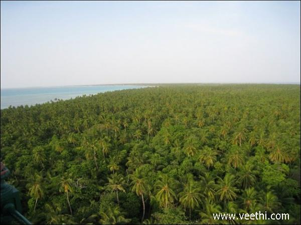 view-of-greenery-on-the-minicoy-shore