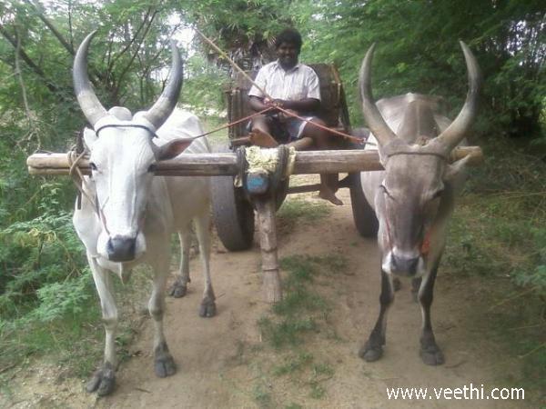 Vilathikulam Photos